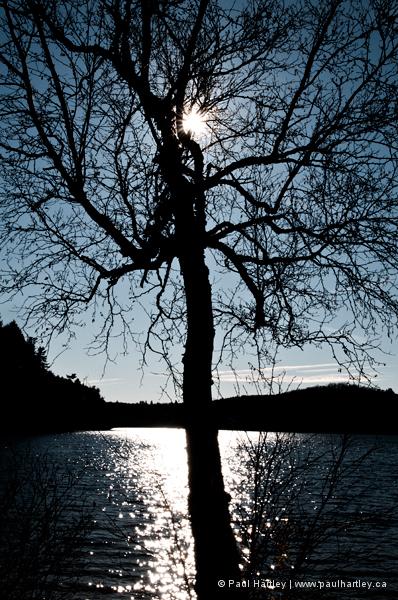 high contrast lake tree and sun