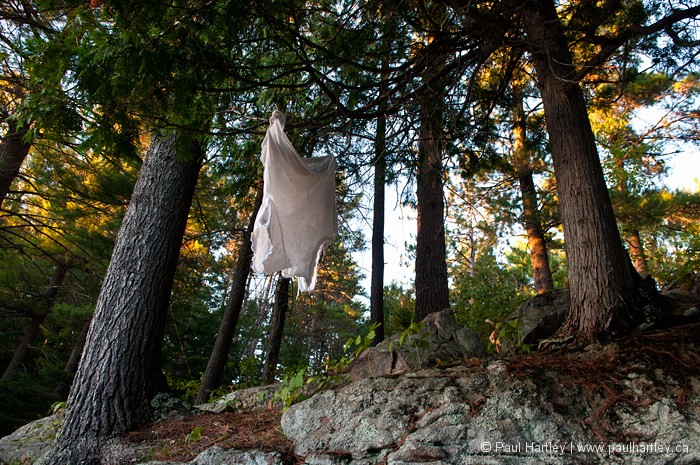 t shirt hanging in forest