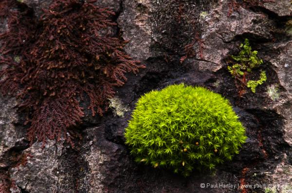 ball of moss on bark
