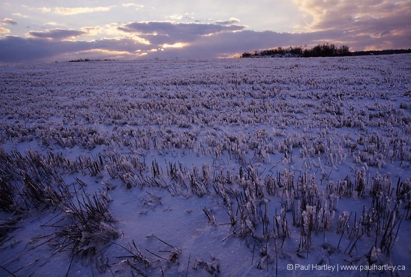 Frozen farmers field