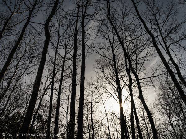 Forest with sunburst
