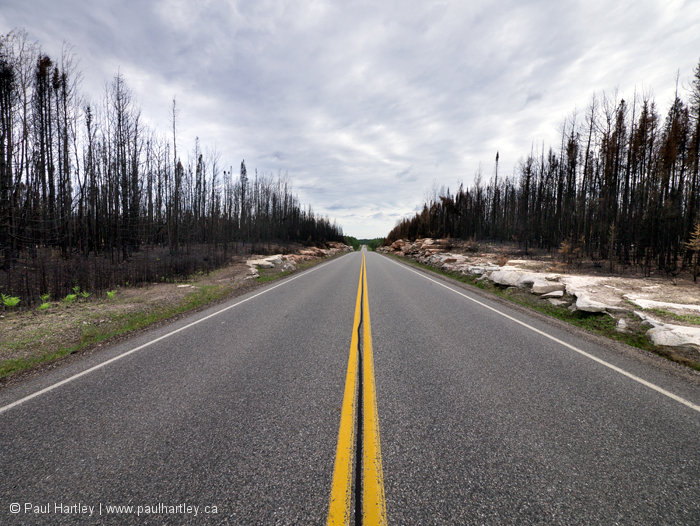Burnt roadside forest