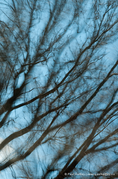 Tree branches in blue