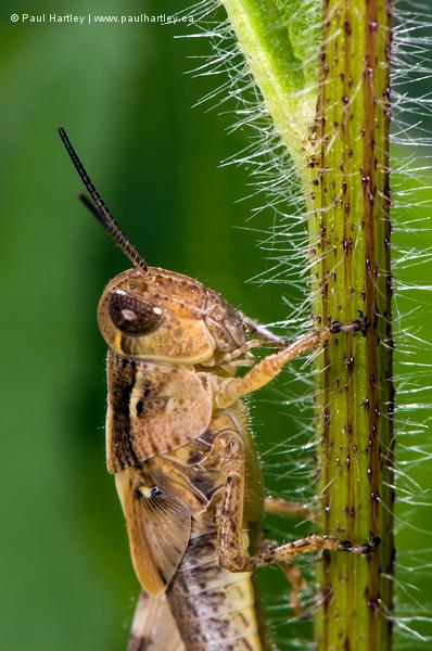 Close up of a grasshopper