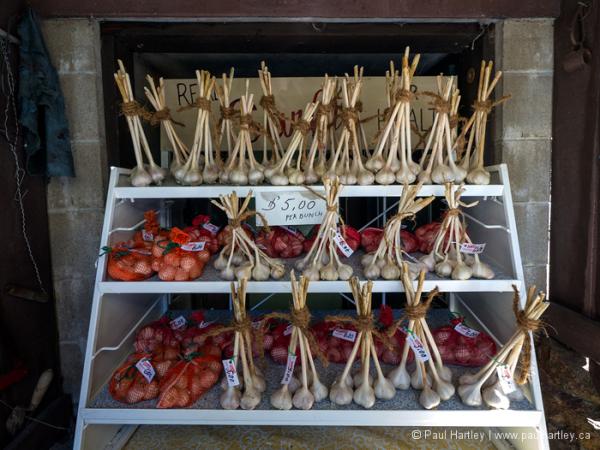 Organic garlic for sale