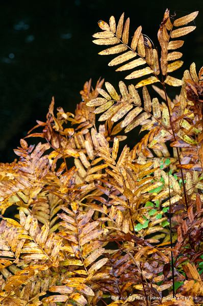Waterfront plant in fall