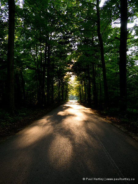 Since and shadows on provincial park road