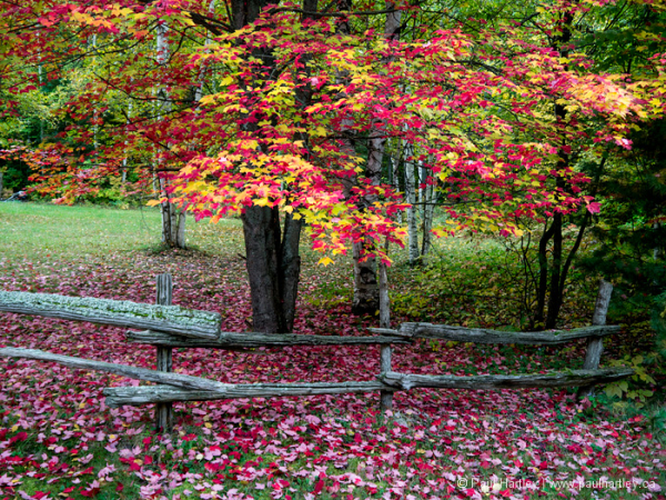 Fall with wood fence