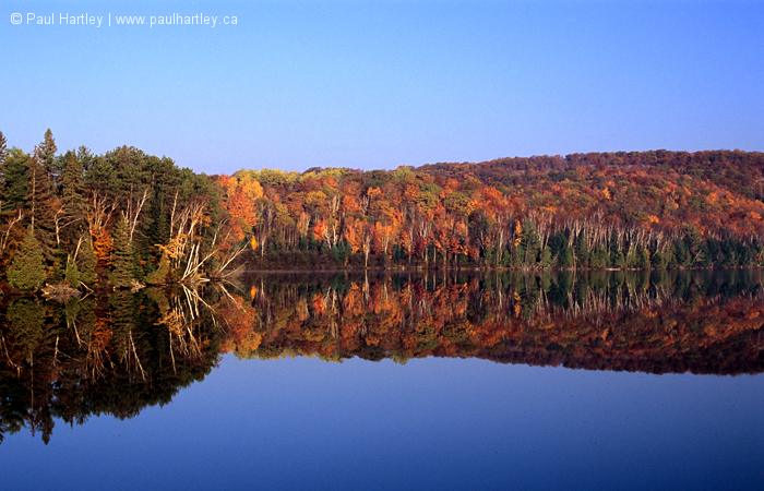 Forest in fall at Bow Lake
