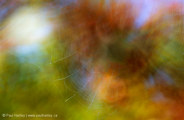 cobweb with fall colour background