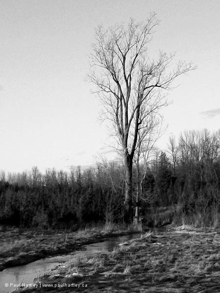 rustic rural landscape