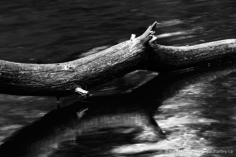 weathered tree branch over a creek