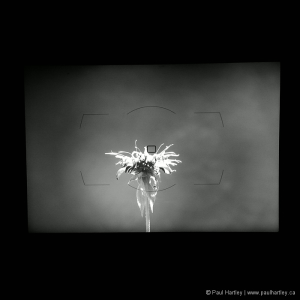 black and white image of a viewfinder