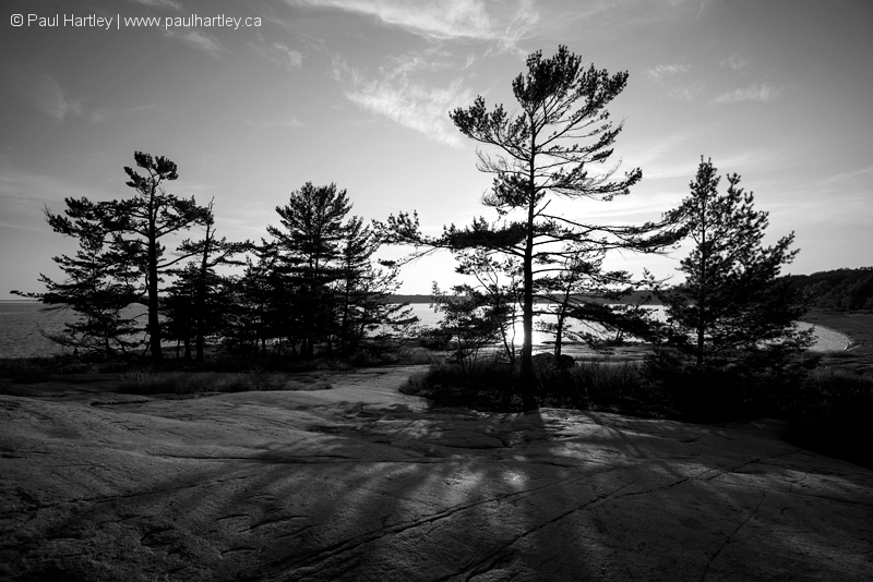 Black and white backlit trees at georgian bay