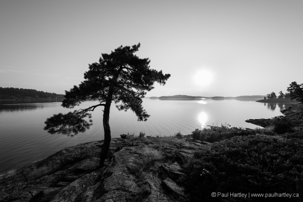 Black and white tree at georgian bay