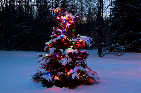 Tree with lights for christmas