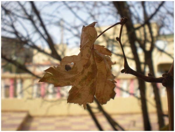 Florilège d'automne VII