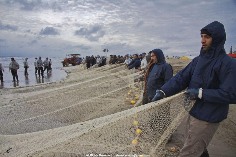Pulling the fish net Mohsen Dayani  تورکشی