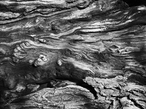 Abstract image taken of the tree