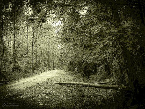 Old jungle