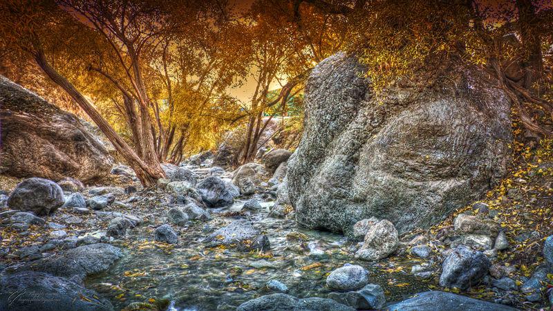 Autumn, Fall, Trees, پائیز, محسن, دیانی
