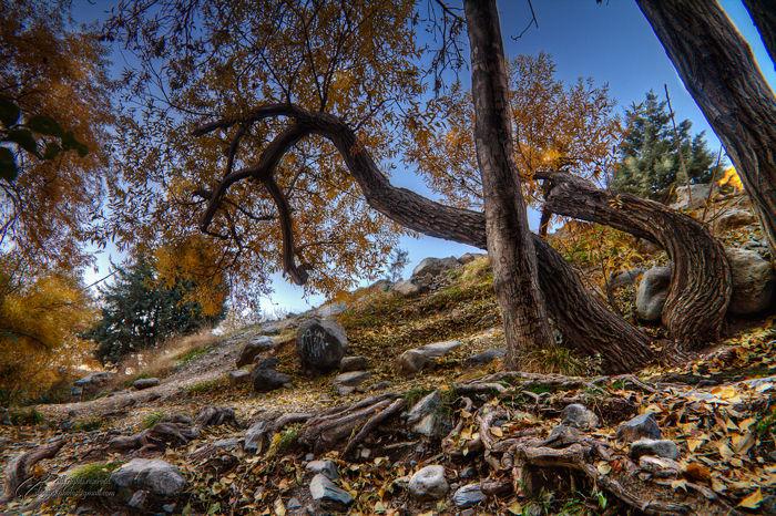 Trees, Fall, Mohsen, Dayani, Dayyani, محسن, دیانی