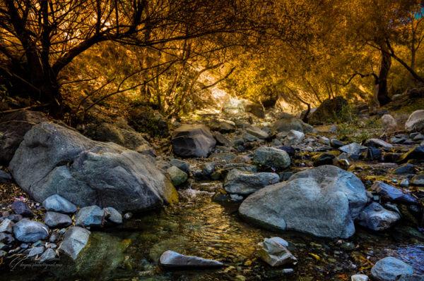 Pond, Rocks, Trees, Fall, Autumn, Mohsen, Dayani,