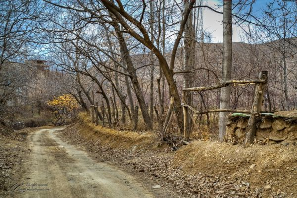 Mohsen, Dayani, lonely, trees, garden, محسن, دیانی