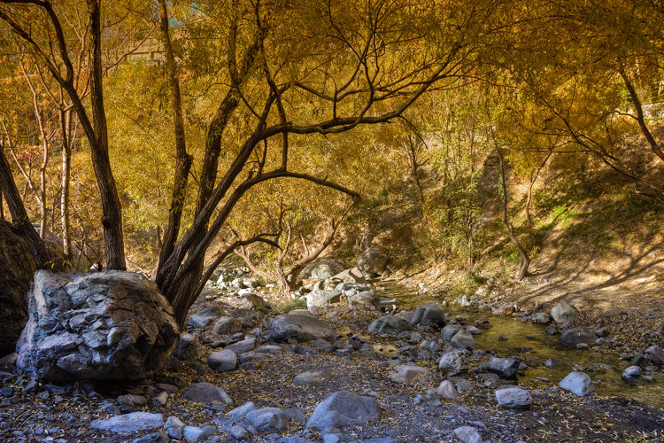 Rocks, Trees, River, Fall, Autumn, Mohsen, Dayani,