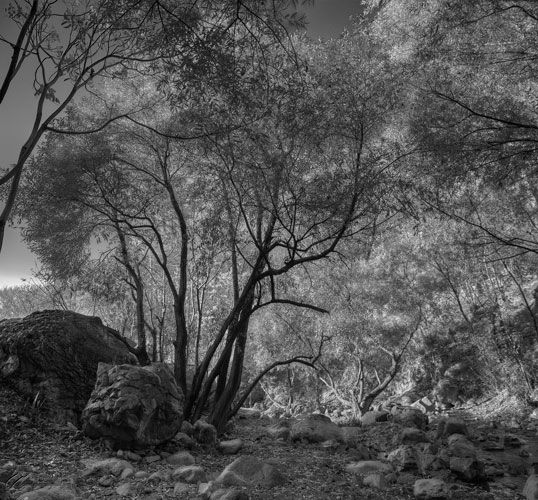 Rocks, &, Trees, Mohsen, Dayyani, محسن, دیانی
