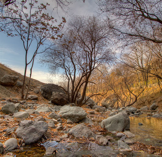 Rocks, Morning, Trees, Mohsen, Dayyani, محسن, دیان