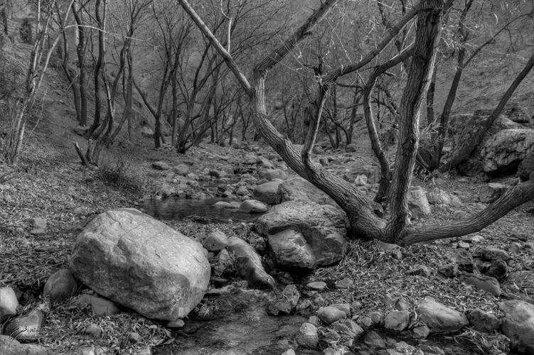 Rock, Tree, River, Mohsen, Dayani, محسن, دیانی