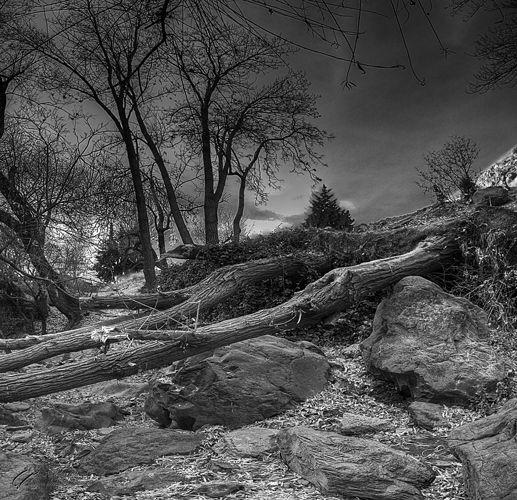 Tree, Landscape, Mohsen, Dayani, محسن, دیانی