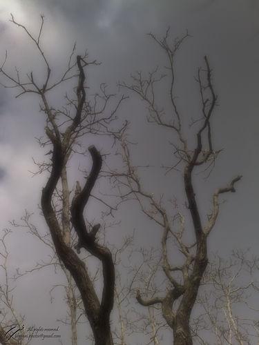 Tree, Sky, Mohsen, Dayani, محسن, دیانی