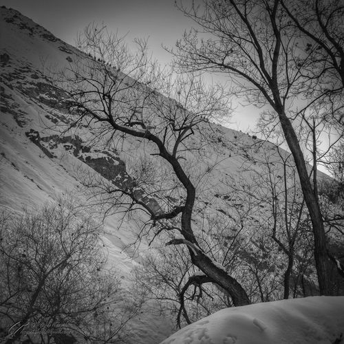 Tree, Mountain, Snow, Mohsen, Dayani, محسن, دیانی