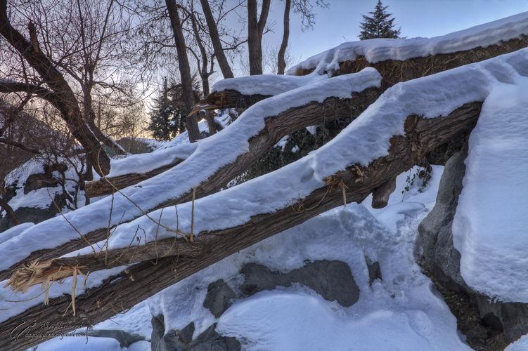 Fallen, Tree, Snow, Mohsen, Dayani, محسن, دیانی