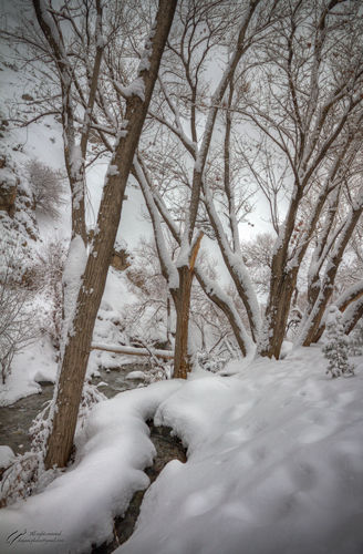 Snow, Tree, River, Mohsen, Dayani, محسن, دیانی