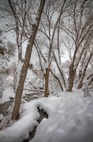 Snow, Tree, River, Mohsen, Dayani, محسن, دیانی