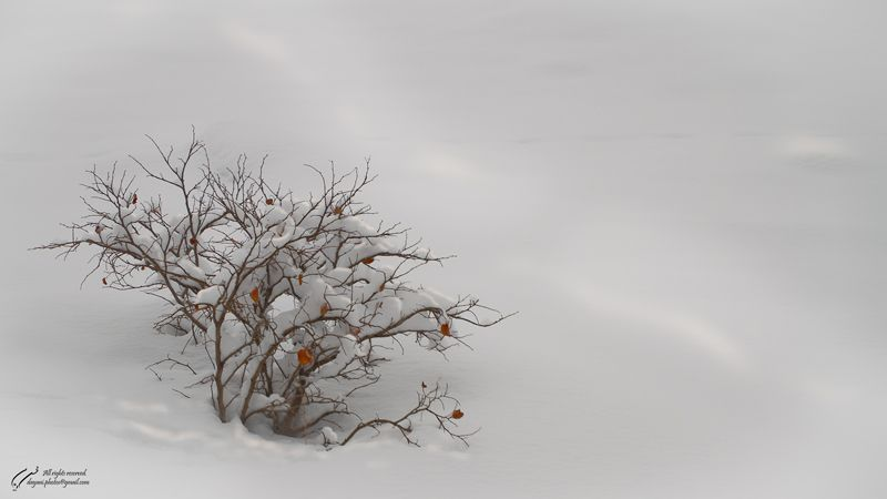 loneliness, Tree, Snow, Mountains, Mohsen, Dayani,