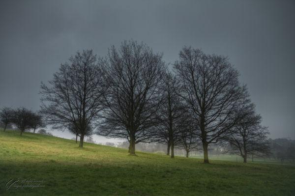 UK, Greater London, Paddington, Regent's Park,