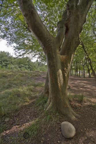 Tree, Forest, Mohsen, Dayani, محسن، دياني، جنگل،