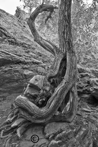 Mohsen, Dayani, Tree, Darabad, Tehran, Iran, محسن،