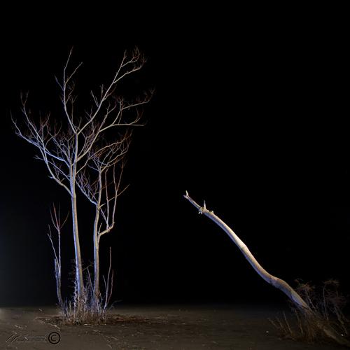 Mohsen,Dayani,Tehran,Darabad,Tree,Darkness,Iran,St