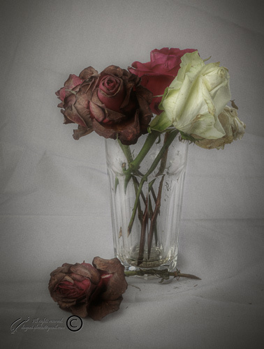 Flower, Still life, Mohsen, Dayani, محسن، دياني، ط