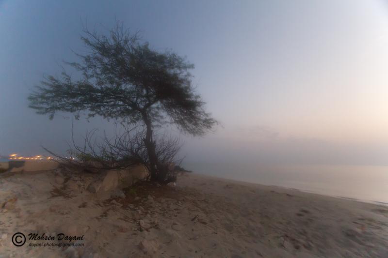 Kish, Tree, Sea, Mohsen, Dayani, محسن, دیانی, کیش