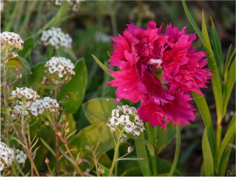 Une fleur pour la boutonniere