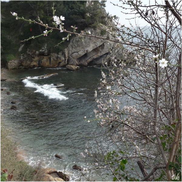 Bord de mer au printemps