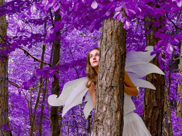 Dans la forêt enchantée