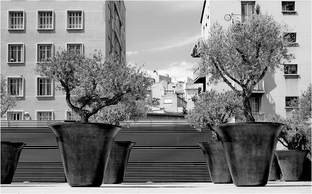 Un coin de terre, un olivier...