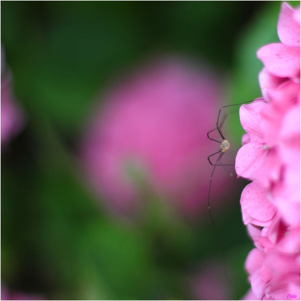 Au jardin (4)